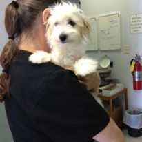 Are You Moving To Another Place And Worried About How Your Pets Get There Safely Contact Airvets That Provides Best Pet Relocation Services And S With Images Pet Relocation