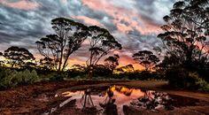 W.A Bush Sunset