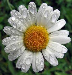 Plants, Mint, Mathematics, Education, School, Nature, Plant, Planets, Peppermint
