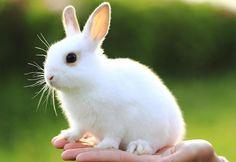 bebé conejo