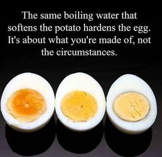 The same boiling water that softens the potato hardens the egg. It's about what you're made of, not the circumstances. thedailyquotes.com