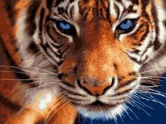 Картина по номерам «Взгляд тигра»
