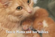 Homeless Kittens Born At Mall Are Rescued With Mother