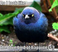 Do I Look Like the Bluebird of Happiness?