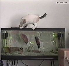 I want a fish!