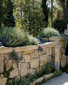 stone wall with wall planting in a San Francisco Bay area garden designed by Scott Colombo