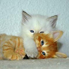 Shush    Linda Rommelaere via Kirs Ten onto Fat Cats, Skinny Cats, Baby Cats