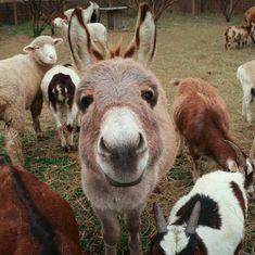 New Jersey's Freedom Farm Animal Rescue Secures A New Sanctuary; Names Rescue Barn In Honor Of Peace 4 Animals New Jersey's Freedom Farm Animal Rescue Secures A New Sanctuary; Names Rescue Barn In Honor Of Peace 4 Animals Baby Donkey, Cute Donkey, Mini Donkey, Small Animal Rescue, Animal Rescue Shelters, Shelter Dogs, Animals And Pets, Funny Animals, Cute Animals