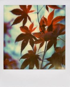 Leaves by Andy Jenkins
