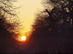 Sunset Greenwich park London