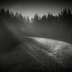 Silent Forest by Alexandru Crisan on Art Limited Great Pictures, Cool Photos, Image Photography, Nature Photography, Nature Landscape, Magic Forest, Art And Architecture, The Great Outdoors, Scenery