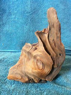 amazing driftwood
