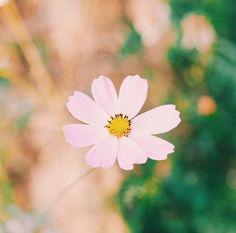By charityolivia: Look. Like.  #photooftheday #landscape_captures #landscape #landscape_lovers #landscapes #flowers #bluesky #sky #budapest #skyline #skylovers #skyporn #clouds #sea #mountains #mountain #beach #france #wonderlust #wanderlust #sun #sunrise #sunset #naturelover #travel #vscocam #instatravel #water #paris #flower #landscape #contratahotel