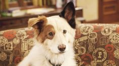 Dog With a Blog, A Disney Sitcom About A Dog That Can Read & Write