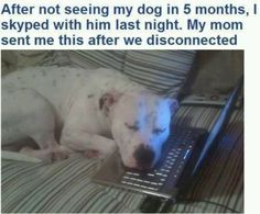 You can connect with your dogs via internet (Skype).