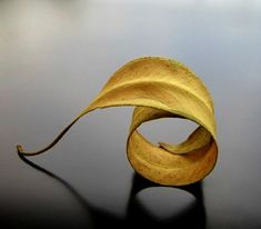 A fun image sharing community. Explore amazing art and photography and share your own visual inspiration! Spirals In Nature, Fall Inspiration, Fotografia Macro, Paperclay, Foto Art, Natural Forms, Natural Shapes, Mellow Yellow, Yellow Art