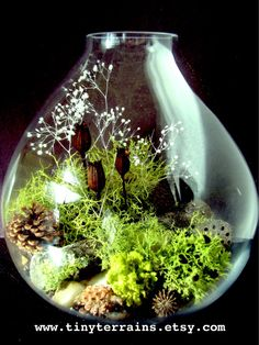 Large Teardrop Lichen Terrarium by TinyTerrains on Etsy