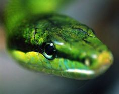 Image result for green snake drawing