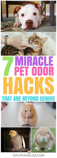 7 miracle pet odor hacks everyone needs in their cleaning arsenal
