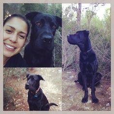 #Ilovmydog I do, my big boy #sharpeimix