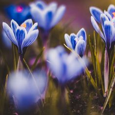 Flora by Kristina Manchenko on 500px