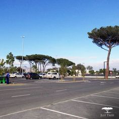 #ThrowbackThursday to our project with Vula Environmental Services and CNdV Africa all the way back in 2014 when we provided trees for the landscape around the Helderberg Hyper. Some of the main species used were Syzygium guineense (Water Pear), Syzygium cordatum (Water Berry), Erythrina caffra (Coastal Coral Tree) and Harpephyllum caffrum (Wild Plum). We love how helpful these beauties are in a parking lot environment where they beautify the area and provide shade to keep the cars/clients… The Way Back, All The Way, Parking Lot, Plum, Berry, Coastal, Environment, Africa, Trees