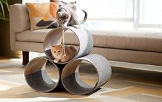 I need to build this for my kitties!