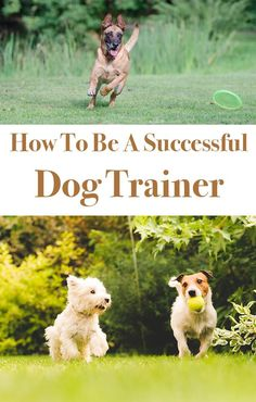 9 great ways to have a successful dog training session. Helping you to make the most of every moment you spend together.