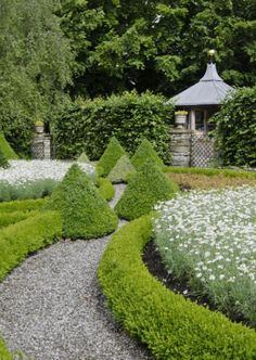 love this pathway in crushed granite, clippped boxwood hedge and topiary box at axis points Boxwood Garden, Garden Hedges, Topiary Garden, Garden Paths, Garden Landscaping, Boxwood Hedge, Topiary Trees, Formal Gardens, Outdoor Gardens