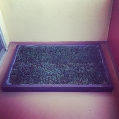 Indoor Dog Potty and Dog Potty Grass delivery for dog litter boxes and the dog potty patch in Los Angeles and Orange County Big Dogs, Large Dogs, Dogs And Puppies, Animal Projects, Animal Crafts, Indoor Dog Potty, Dog Litter Box, Real Dog, Doge