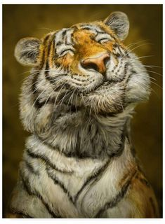 Patrick Lamontagne Smiling Tiger Canvas Art – 20 x 25 - Cutest Baby Animals Laughing Animals, Smiling Animals, Happy Animals, Cute Funny Animals, Cute Baby Animals, Animals And Pets, Wild Animals, Cute Dogs And Puppies, Pet Dogs
