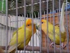 14 Fun Facts About Lovebirds Cute Birds, Fun Facts, Bond, Science, Animals, Number, Watch, Couples, Life