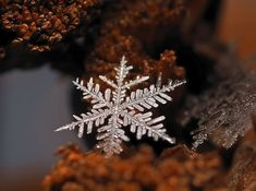 macro photos of snowflakes by Andrew Osokin