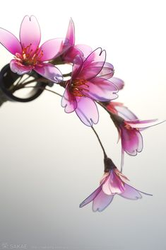 簪作家榮 2011しだれ桜簪 Japanese hair accessory -Cherry Blossom Kanzashi- by Sakae, Japan   http://sakaefly.exblog.jp/   http://www.flickr.com/photos/sakaefly/