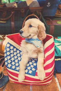 If you're lucky, a golden retriever will appear in your life, never want to leave your side, steal your heart, and change everything 🤗 --Bennie 🐺 Cute Puppies, Cute Dogs, Dogs And Puppies, Doggies, I Love Dogs, Puppy Love, Mans Best Friend, Fur Babies, Dog Lovers