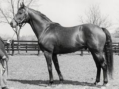 Somethingroyal, dam of Secretariat.
