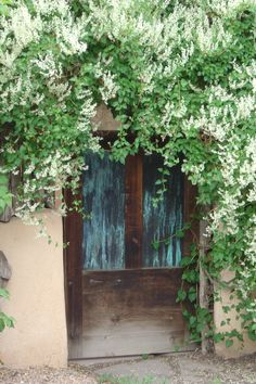 Silver Lace Vine--One of my favorites, Super cover up an ugly wall or fence and fast growing, if you don't mind a lot of pruning.