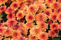 Check out these 17 easy to grow perennials for your garden. Flowering plants which need very little attention and give you a blossoming backyard. Perrenial Flowers, Flowers Perennials, Planting Flowers, Flowering Plants, Ornamental Plants, Sun Garden, Autumn Garden, Exotic Flowers, Amazing Flowers