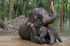 Mom and baby, elephant Elephants Never Forget, Save The Elephants, Baby Elephants, Elephants Playing, Elephant Family, Elephant Love, Mama Elephant, Elephant Bath, Happy Elephant