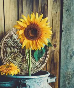 Sunflower Meaning; Happy Flowers, Flowers Nature, Beautiful Flowers, Sun Flowers, Paper Sunflowers, Sunflowers And Daisies, Wildflowers, Sunflower Garden, Sunflower Art