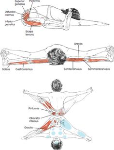Upavistha Konasana Seated Wide-Angle Pose © Leslie Kaminoff's Yoga Anatomy B E N E F I T S — Stretches the insides and backs of the l...