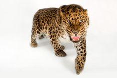 Conheça 10 dos animais mais raros do mundo - Mega Curioso