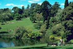 Botanic Gardens, Melbourne. Amazing free day out. Sunday lazy afternoon with our dogs and little baby Jack