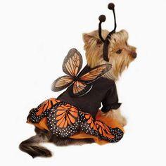 101 mascotas: 8 Disfraces de mariposa para perros