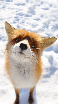 How aware this little fox beauty is !