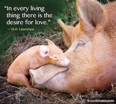 """""""""""En cada ser viviente existe el deseo de amor"""". D.H. Lawrence"""