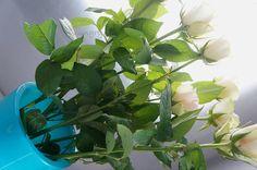 Kitchen Stori.es: Πασχαλινό Μενού 2017 Kitchen Stories, Easter Recipes, Menu, Plants, Menu Board Design, Plant, Planets