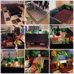Coffee table-based habitat