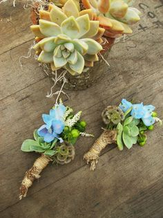 succulent wrapped with burlap