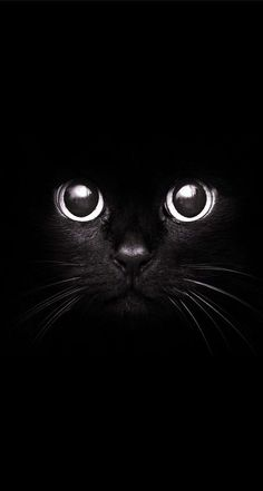 Cute cats black kitty, cute black cats, black cat art, cute cats, i love . Cool Cats, I Love Cats, Crazy Cats, Cute Kittens, Cats And Kittens, Ragdoll Kittens, Tabby Cats, Bengal Cats, Kitty Cats
